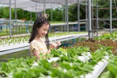 Asian cute girl is learning to grow organic vegetables in the fa stock photo