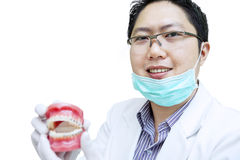 Asian dentist show teeth braces on white background Stock Photography