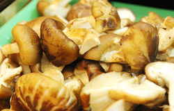 Asian dishes - steamboat. Asian dishes - sliced shiitake mushrooms for steamboat set in shallow depth of field royalty free stock photography