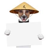 Asian dog Royalty Free Stock Photo