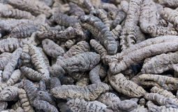 Asian Edible Insects Stock Photography