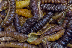 Asian Edible Insects Stock Images