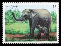 Asian Elephant (Elephas maximus), Animals serie, circa 1987. MOSCOW, RUSSIA - SEPTEMBER 26, 2018: A stamp printed in Vietnam shows Asian Elephant (Elephas stock images