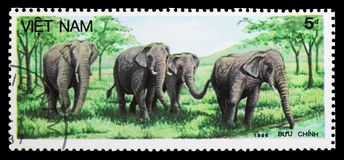 Asian Elephant (Elephas maximus), Animals serie, circa 1987. MOSCOW, RUSSIA - SEPTEMBER 26, 2018: A stamp printed in Vietnam shows Asian Elephant (Elephas stock photography