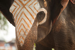 Asian Elephant face have been writing colors. Royalty Free Stock Photos