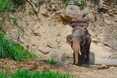 An asian elephant  with howdah for trekking Stock Image