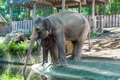 Asian elephant mother and baby Stock Photo