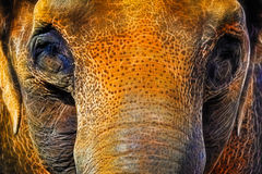 Asian Elephant Neon Special Effect Royalty Free Stock Photos