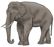 Asian Elephant Simple Illustration. Simple illustration of an asian elephant outlined in black isolated on white Royalty Free Stock Photo