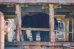 Asian elephant in the stall, Hampi, India stock photo