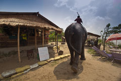 Asian Elephant Walks Thru Nepal  Village Stock Images