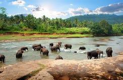 Elephants in park Stock Photography