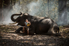 Asian elephants in the wild tales I read his children`s book rea Stock Photos