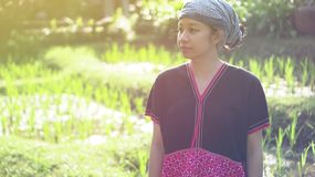 Asian ethic woman with native dress smile at her organic rice fi stock image