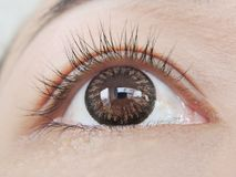 Asian eye. Close up asian hazel eye stock image