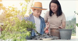 Asian family prepare black soil to little plant on in the garden. Young asian Thai family mother and son prepare black soil to little plant on in the garden royalty free stock image