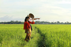 Asian farmer. At paddy field Royalty Free Stock Images