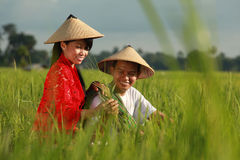 Asian farmer. At paddy field Royalty Free Stock Photo