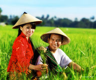 Asian farmer. At rice field wearing traditional dress Royalty Free Stock Images