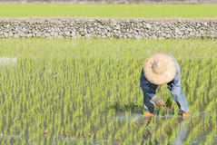 asian farmer Royalty Free Stock Image