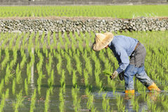 Asian farmer Royalty Free Stock Photos