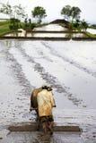 Asian farmer Royalty Free Stock Image