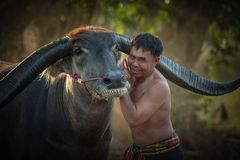 Asian farmer with buffalo in the forest. Stock Photo
