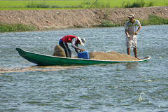 Asian farmer feeding, fish pond, fishery Royalty Free Stock Photos