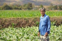 Asian farmer in field Stock Photos