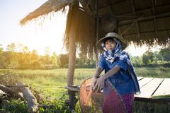 Asian farmer girl working at rice field on harvest season. Selective and soft focus Royalty Free Stock Image