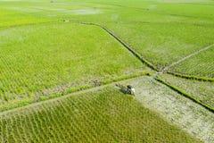 Asian farmer harrowing rice paddy fields royalty free stock image