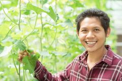 Asian farmer holding young melon fruit stock images