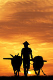 Asian farmer Stock Photos