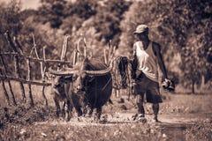 Asian farmer Stock Photography