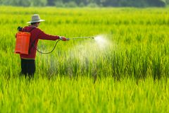 Asian farmer peasantry spraying pesticides in rice fields.  royalty free stock photo