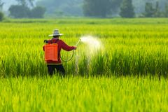 Asian farmer peasantry spraying pesticides in rice fields.  stock photos