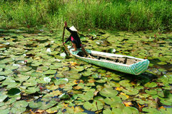 Asian farmer, pick water lily, Vietnamese food. DONG THAP, VIET NAM- SEPT 23: Asian farmer sitting on row boat, pick water lily, one food from nature, aquatic Stock Photo
