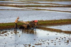 Asian farmer ploughing rice field with tractor machine Stock Image