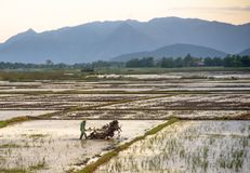 Asian farmer ploughing rice field with tractor machine Royalty Free Stock Photography