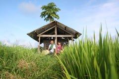 Asian farmer at rice field stock photos