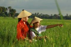 Asian farmer at rice field royalty free stock photo