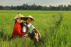 Asian farmer at rice field. With traditional dress Royalty Free Stock Images
