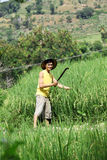 Asian farmer at rice field. Smiling stock photography