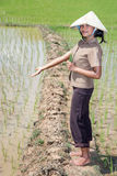 Asian farmer in the rice field. Young Asian farmer showing the rice field Royalty Free Stock Photography
