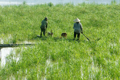 Asian farmer, row boat, family, go to work Royalty Free Stock Images