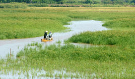 Asian farmer, row boat, family, go to work Stock Image