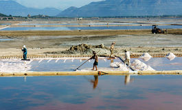 Asian farmer, salt plantation, Vietnamese salina Royalty Free Stock Photo