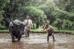 Asian farmer and son working royalty free stock photos