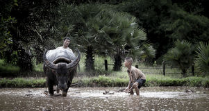 Asian farmer and son working with his buffalo Royalty Free Stock Photo