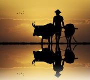 Asian farmer at sunset Royalty Free Stock Photos